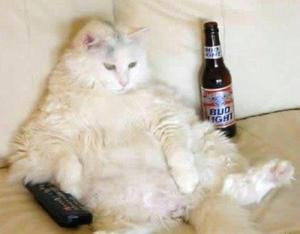 cat sabbath